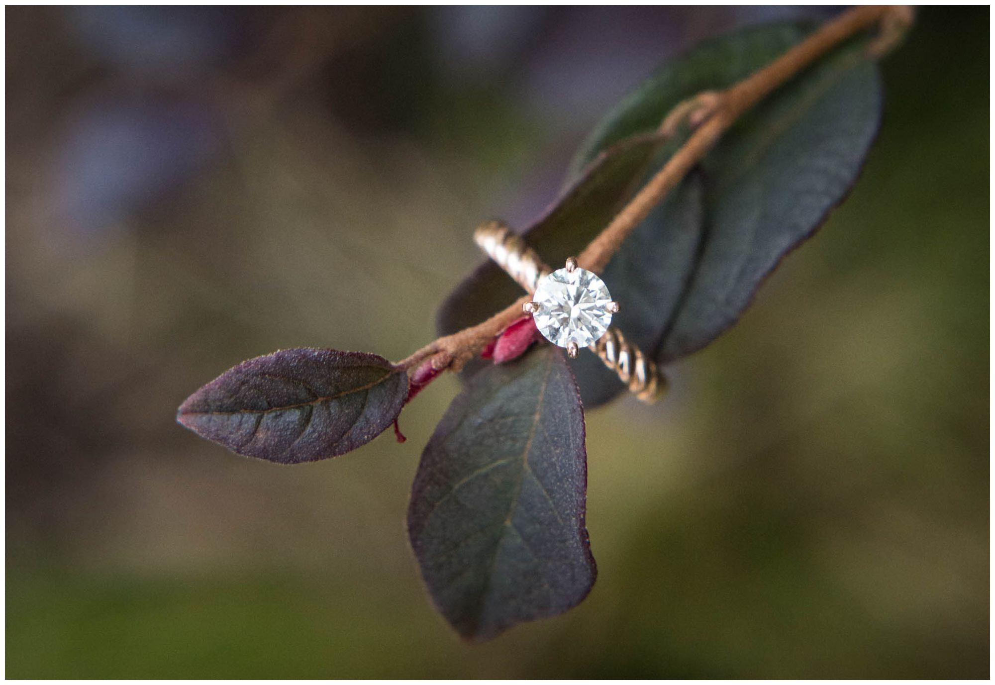 rose gold engagement ring on branch