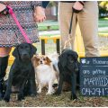 """Engaged couple with three dogs and """"Our humans are getting married"""" sign."""