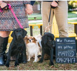 "Engaged couple with three dogs and ""Our humans are getting married"" sign."