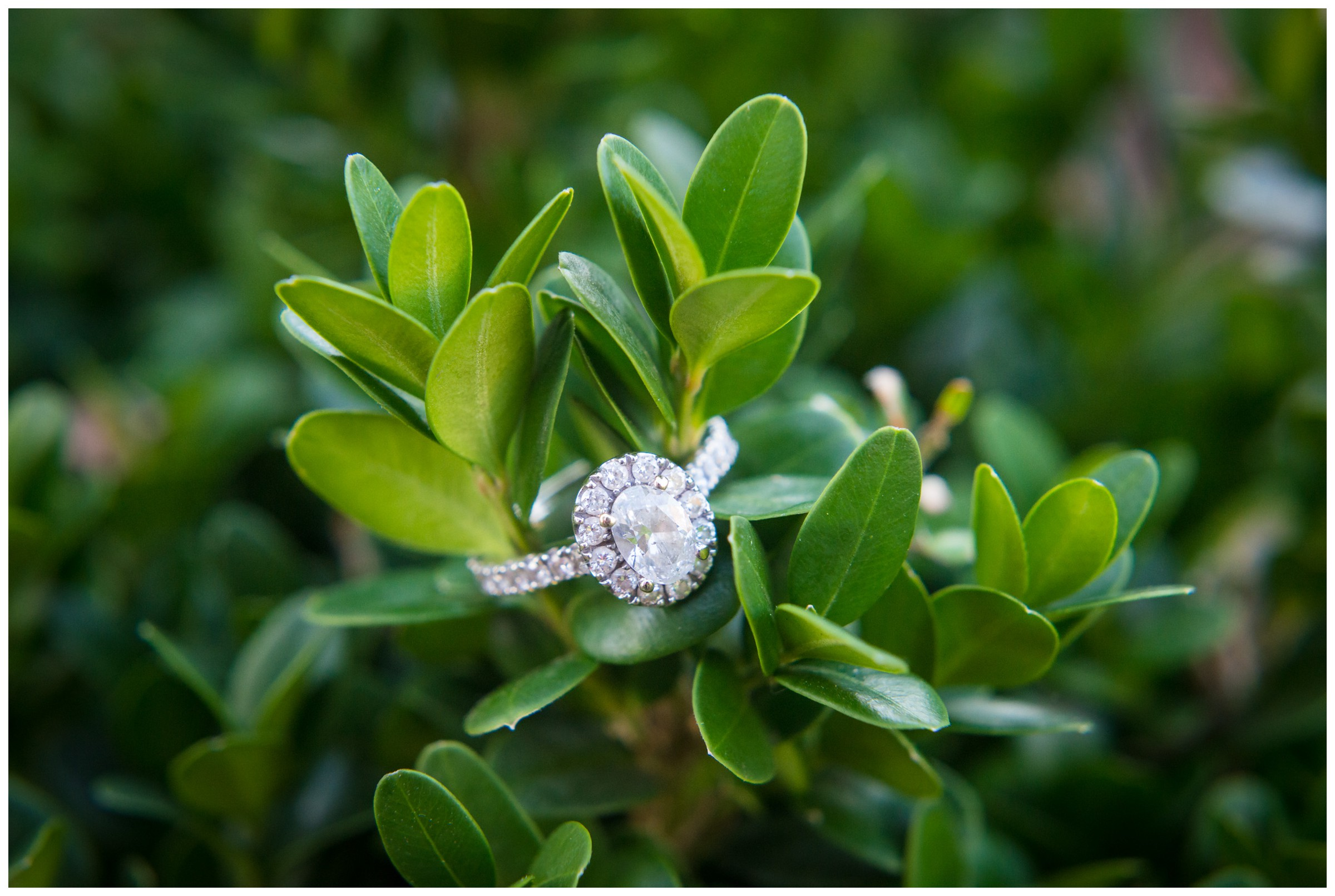 oval engagement ring in greenery