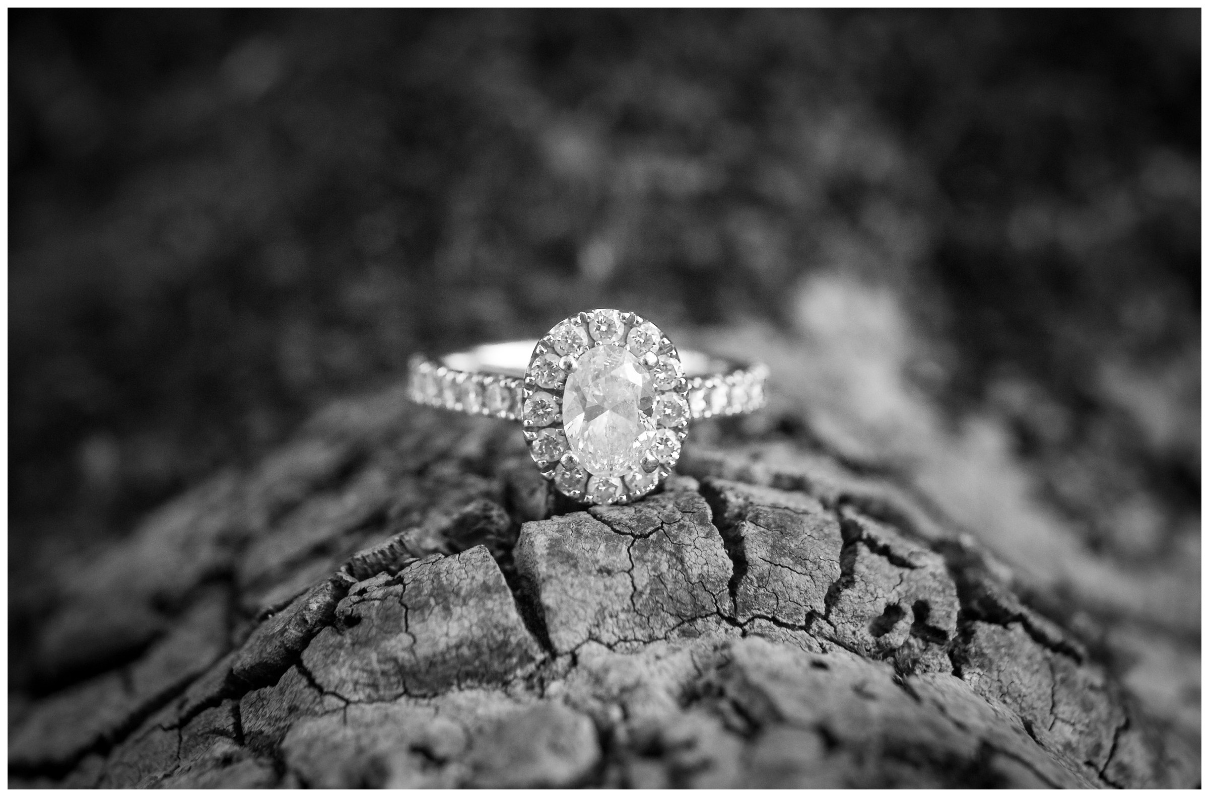 engagement ring on tree bark by northern Virginia wedding photographer