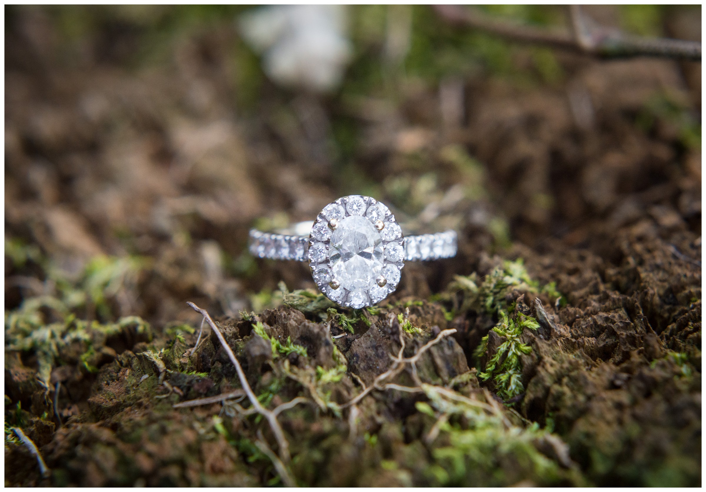 engagement ring on mossy tree