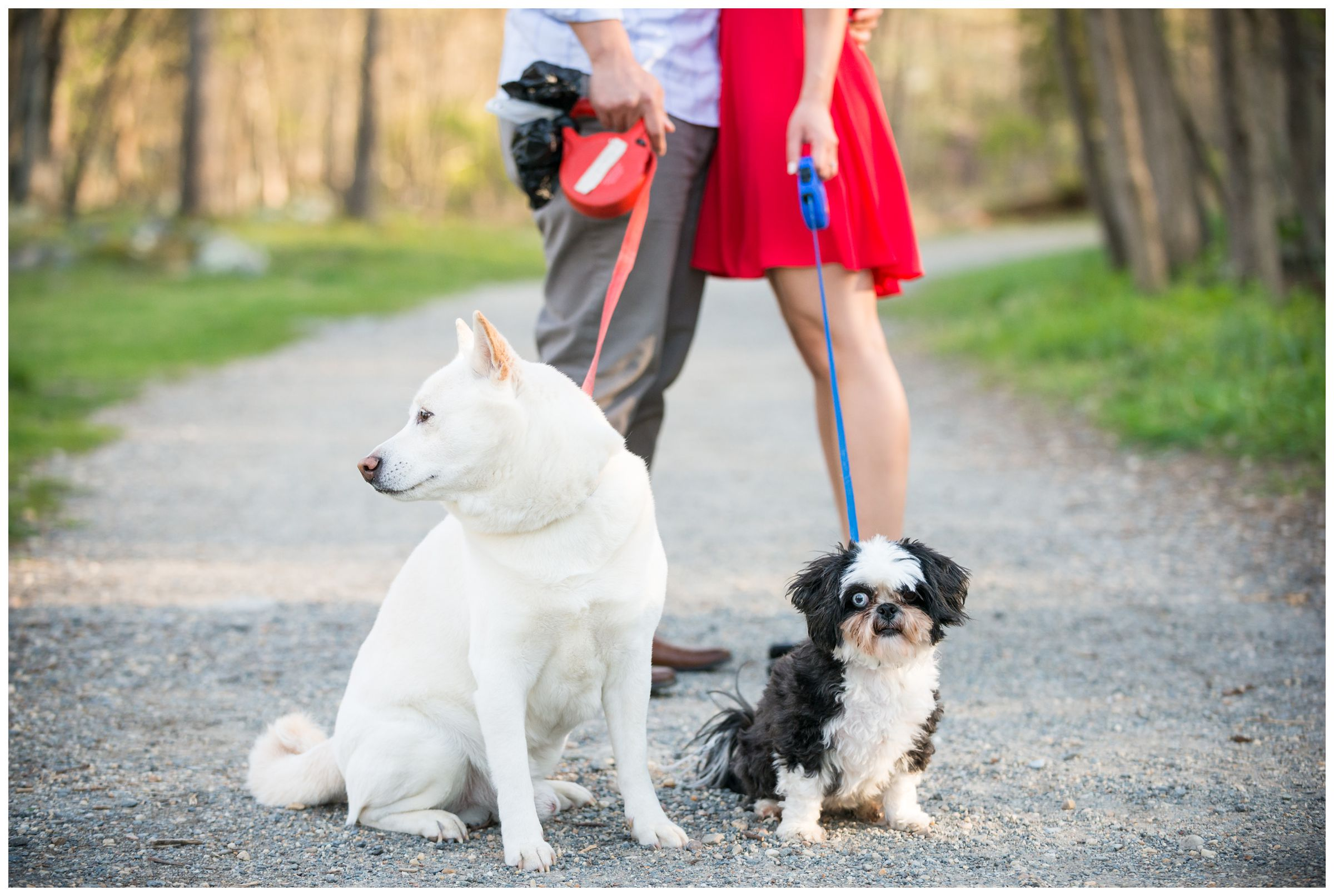 engagement photos of couple with their dogs at Great Falls Park in Northern Virginia