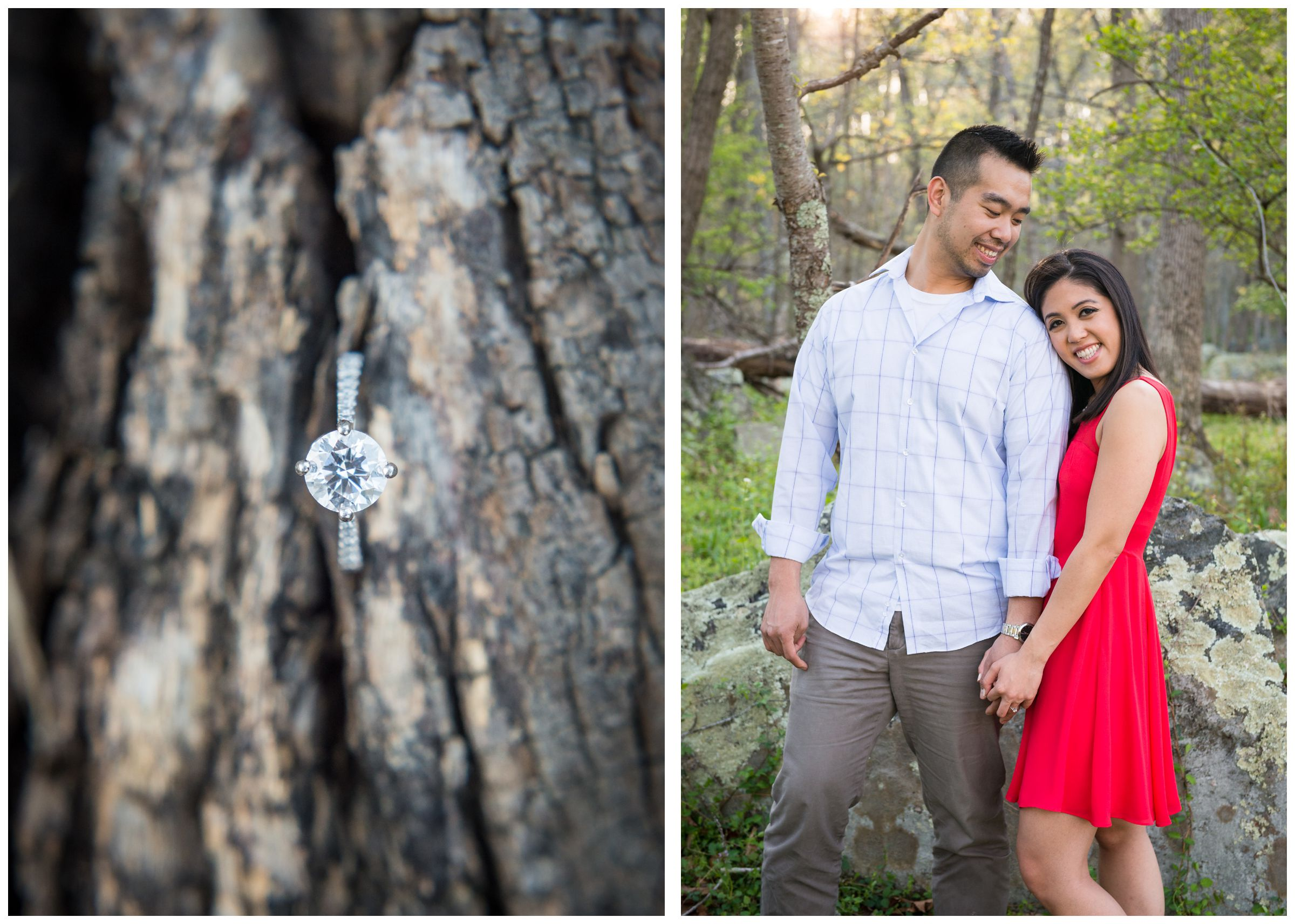 engagement ring on tree bark in Great Falls Park Virginia