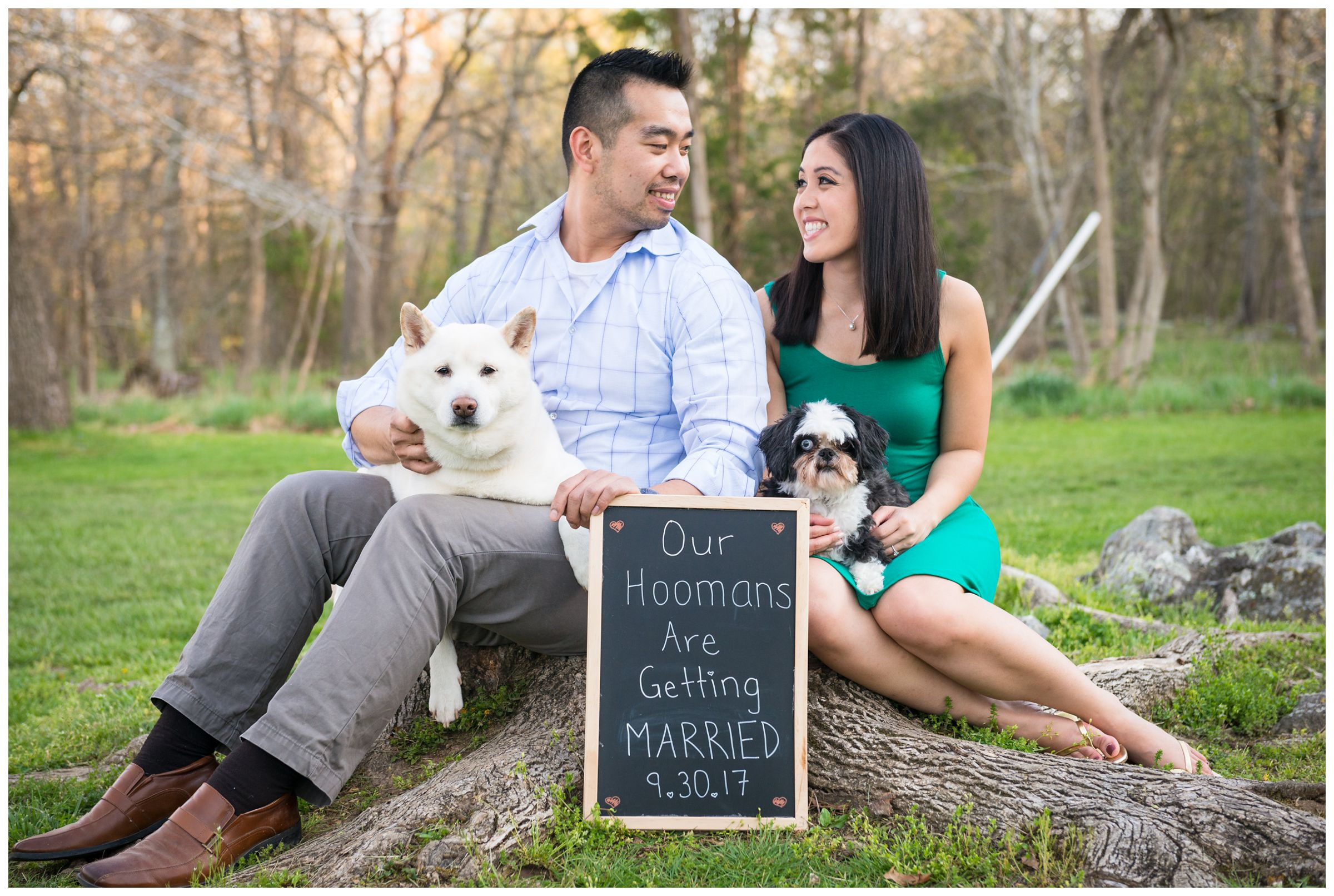 engaged couple and dogs with sign saying our hoomans are getting married
