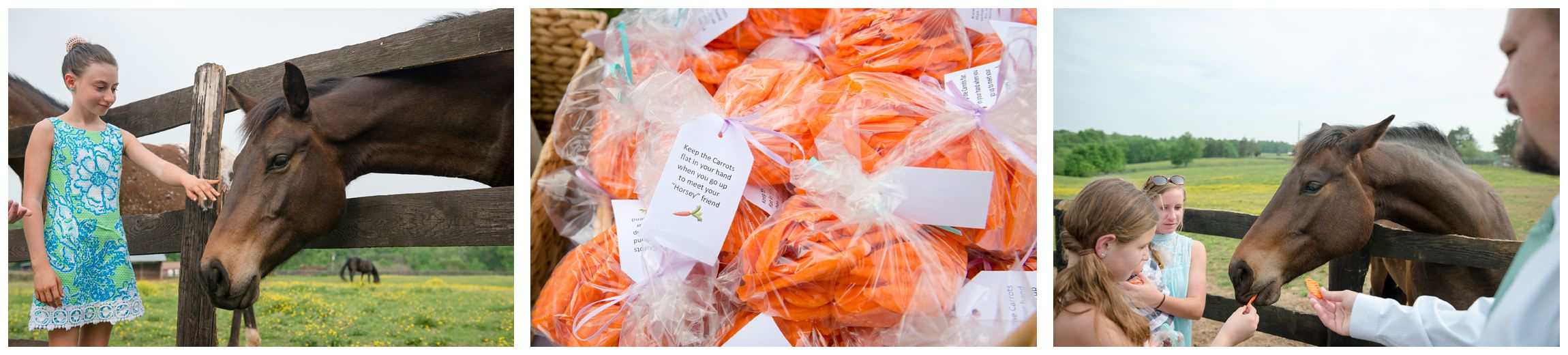 carrots for feeding horses at rustic wedding reception at Wolftrap Farm in Virginia