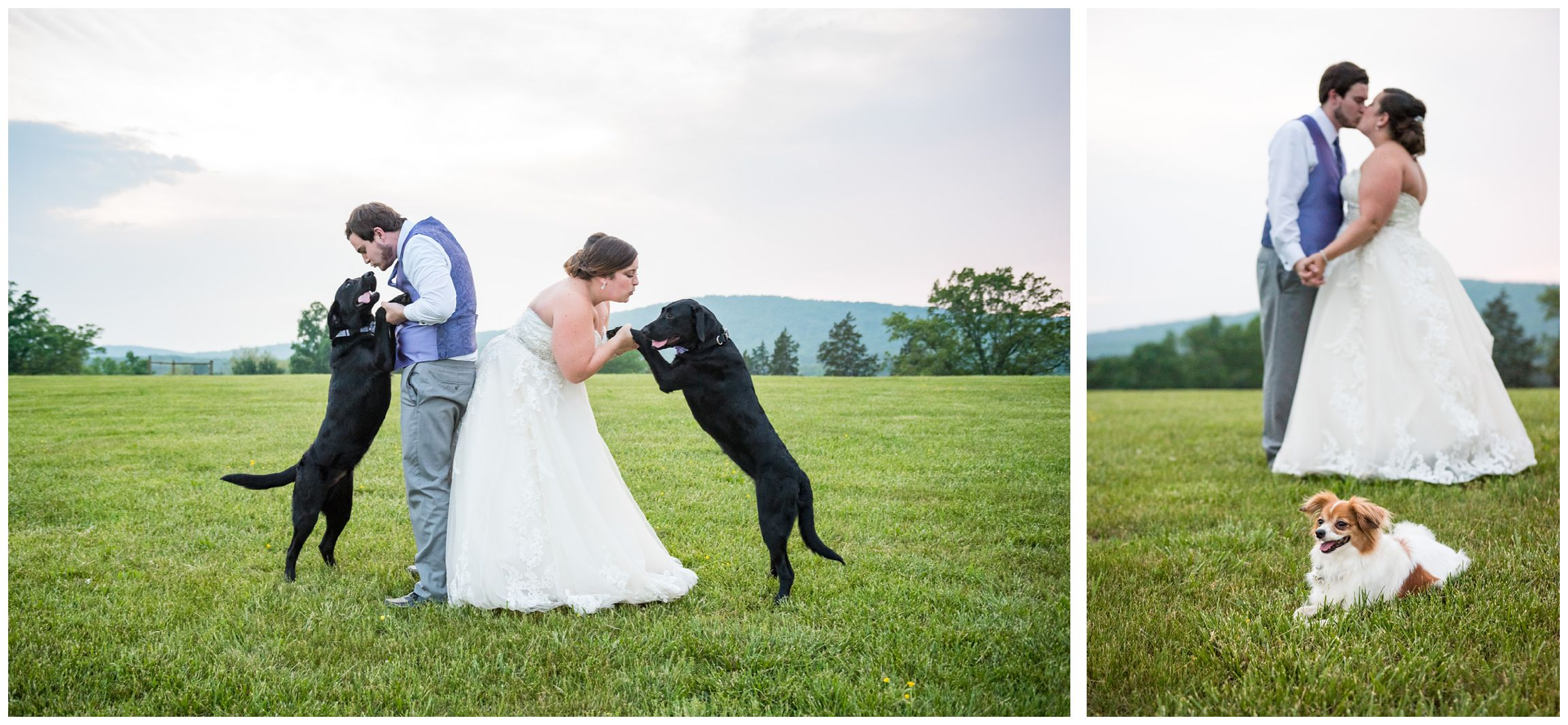 bride and groom with dogs after rustic wedding in the Shenandoah Mountains