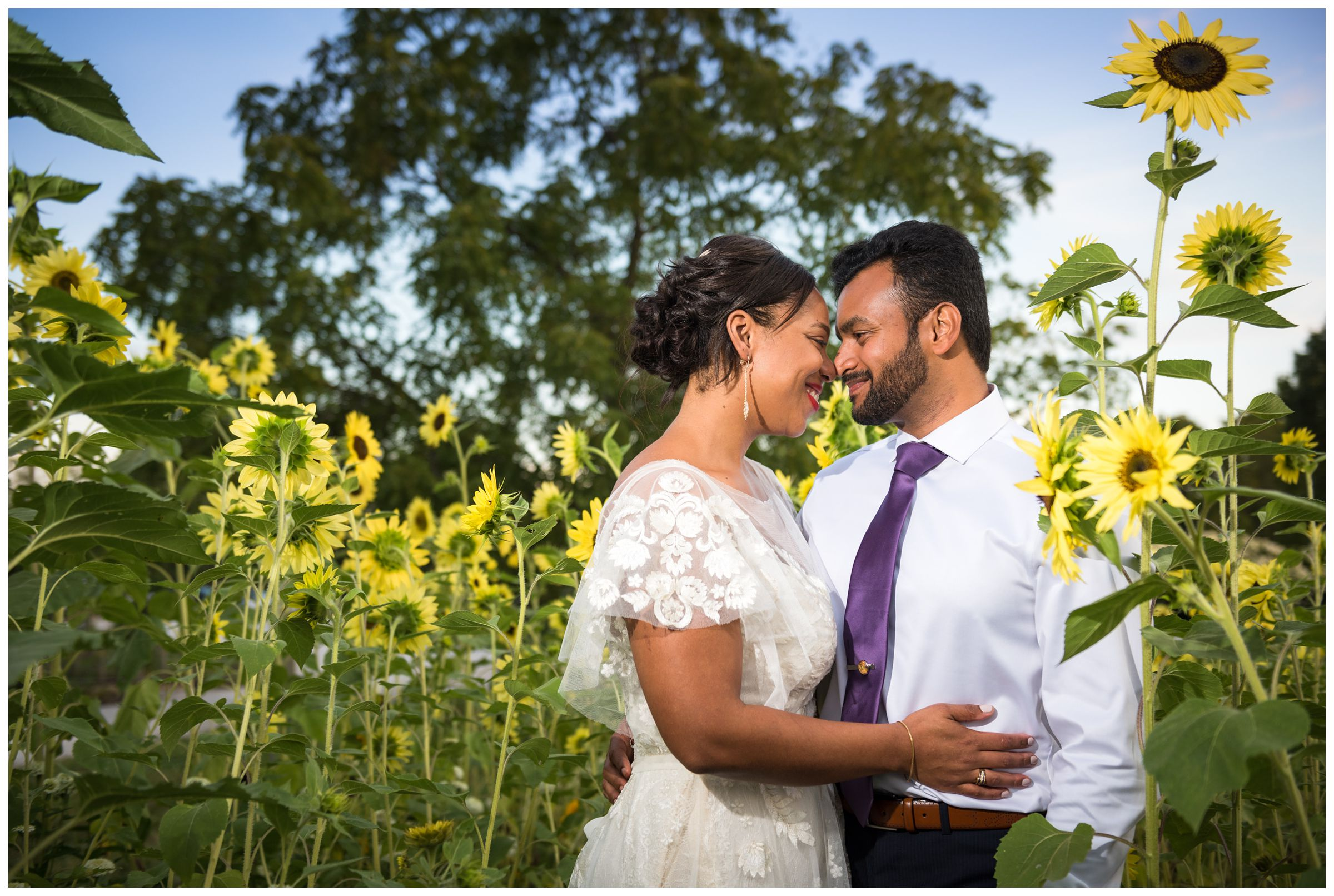 bride and groom fall wedding portrait by Columbus Ohio wedding photographer in sunflower field at Jorgensen Farms